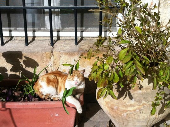 Christ Church Guest House : The resident cat in the courtyard