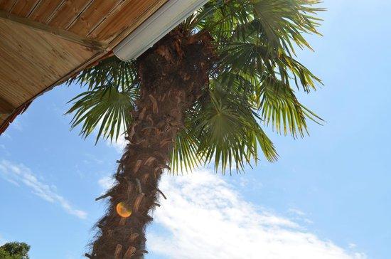 Madame Vacances Villas La Prade : le palmier sur la terrasse