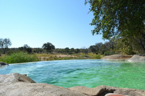 Motswari Private Game Reserve: pool with a view