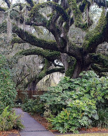 Brookgreen Gardens: One of the many old growth trees