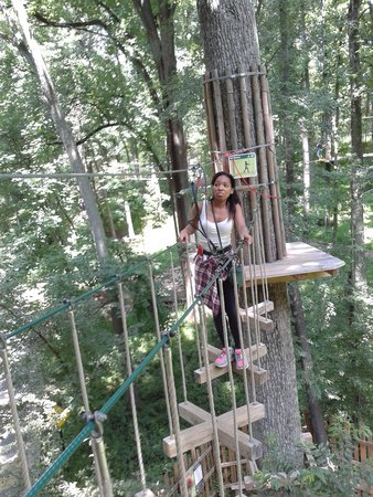 Go Ape Treetop Adventure Course: way up in trees