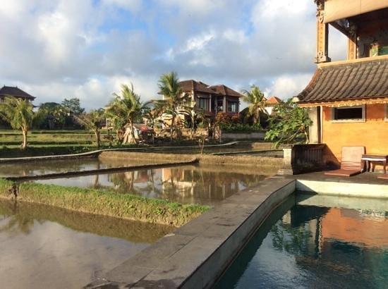 Ala's Green Lagoon: pool in the rice fields