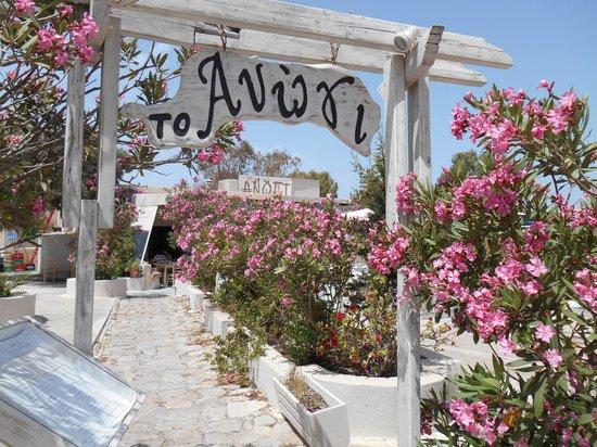 Anogi: この季節、西洋夾竹桃がそこここに咲いていた