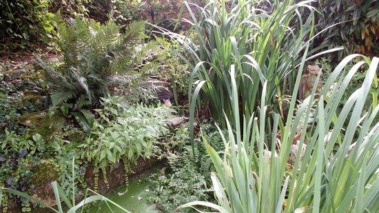 Pilgrims B&B: garden