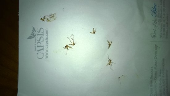 Out of the Blue Capsis Elite Resort: killed mosquitos
