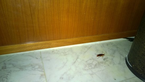 Out of the Blue Capsis Elite Resort: killed bug