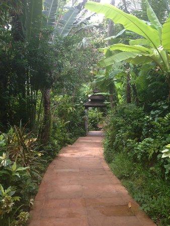 Marina Phuket Resort: Lush walkway