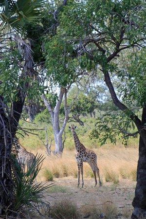 Selous Serena Camp: Safari