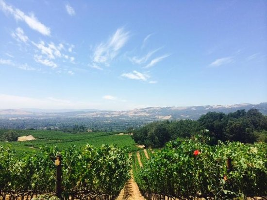 B. Wise Vineyards : WOW that view!!!