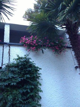 Villa Laguna Galijot: Цветочки
