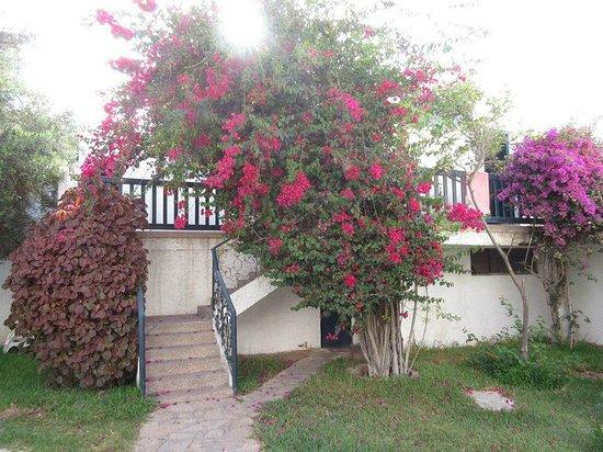 Hotel Royal Agadir : Jardin de fleurs