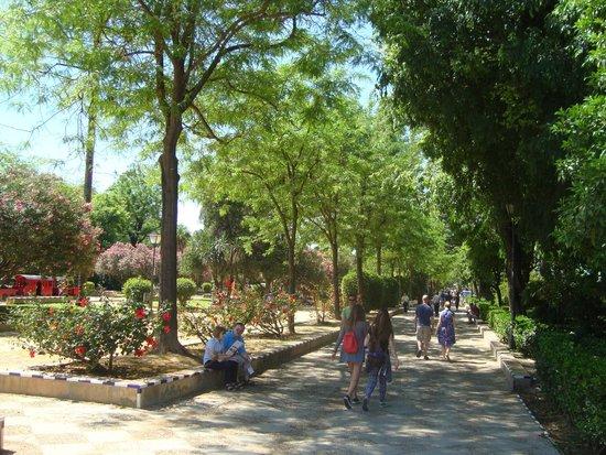 Jardines de Murillo: вид парка