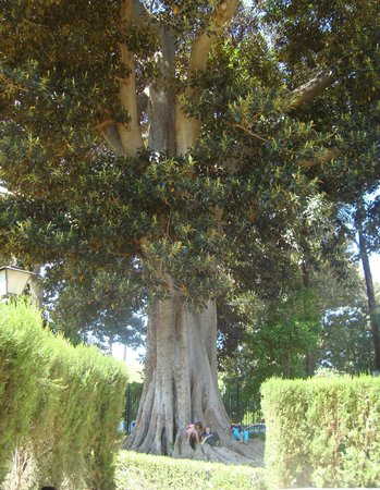 Jardines de Murillo: дерево