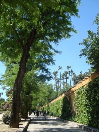 Jardines de Murillo: стены алькасара