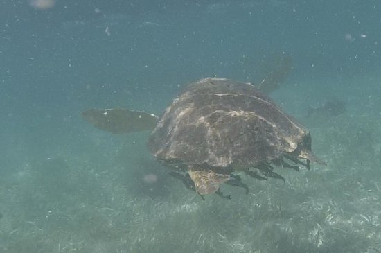 Pirate's Point Adventure Tours : Turtle