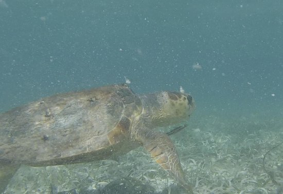 Pirate's Point Adventure Tours: Turtle