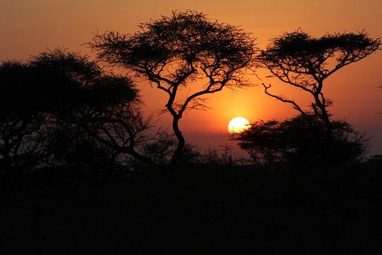 Mapito Tented Camp Serengeti: Serengeti Sunset