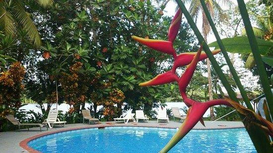 La Baula Lodge : Piscine