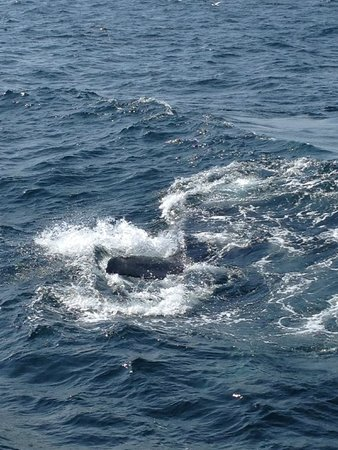 Cape Ann Whale Watch: More awesomeness!!