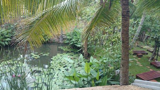 Maison Dalabua Hotel: View from my balcony