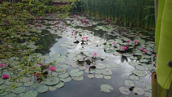 Maison Dalabua Hotel: Beautiful ponds