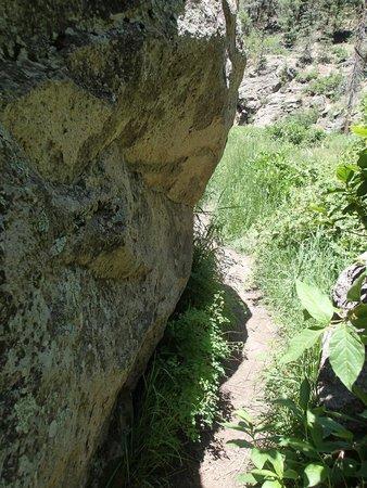 Jemez Mountains: Los Conchas Trail