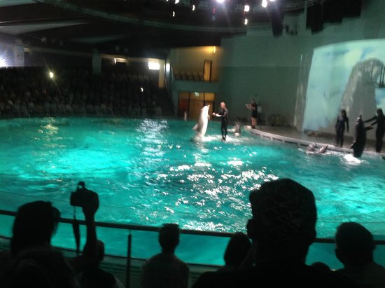 dolphin show - Foto van Lithuanian Sea Museum, Klaipeda - TripAdvisor