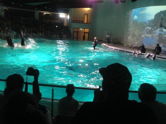 dolphin show - Photo de Lithuanian Sea Museum, Klaipeda - TripAdvisor
