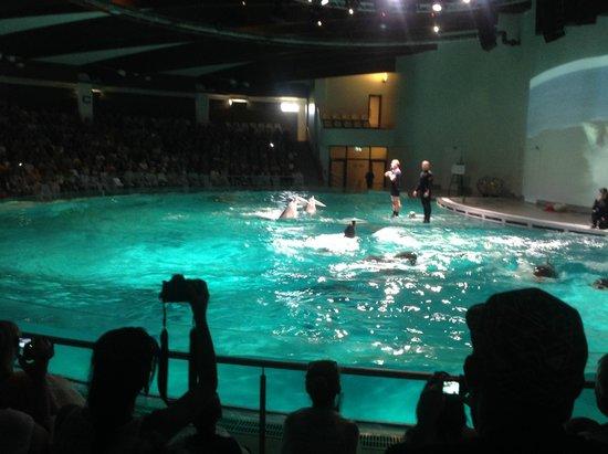 dolphin show - Foto di Lithuanian Sea Museum, Klaipeda - TripAdvisor