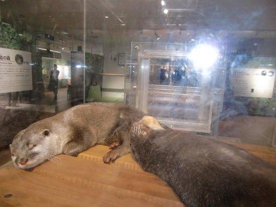Osaka Aquarium Kaiyukan: 子育て中のパパとママ