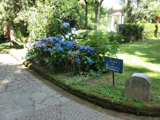 Hotel La Residenza: Красивые растения в парке