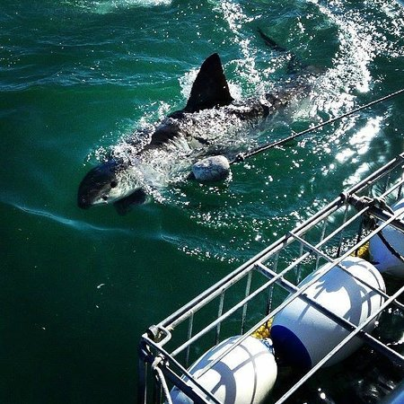 Great White Shark Tours: View from the boat!
