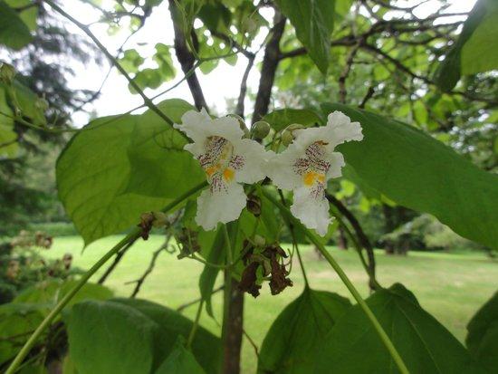 BAUDELYS : arbre  orchidée