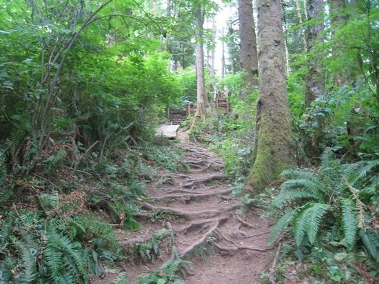 Cathedral Tree Trail up toward Astoria Column