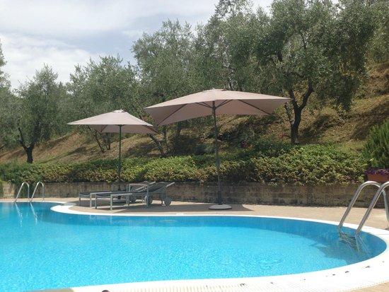 Villa Cilnia: Pool nestled in the olive grove