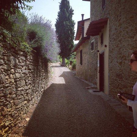 Villa Cilnia: Garden walk to room with Lavender