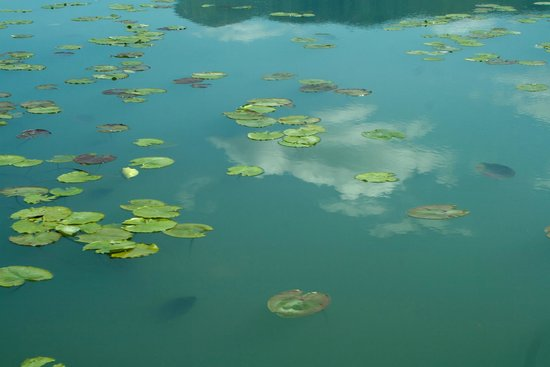Lake Skadar : lac Skadar