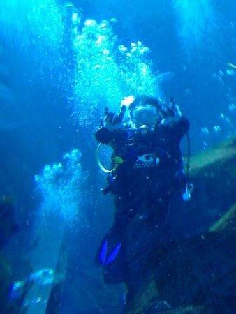 Georgia Aquarium: Diving in the Ocean Voyager tank