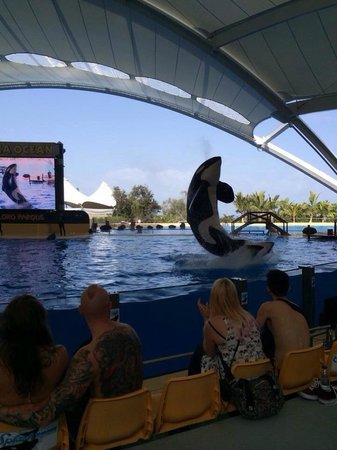 Loro Parque: Orca show .... Brilliant