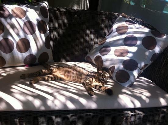 El Vino Hotel & Suites : Hotel kitten