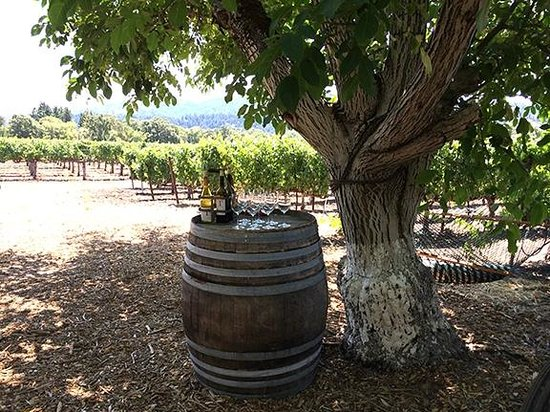 Platypus Wine Tours: Tedeschi winery