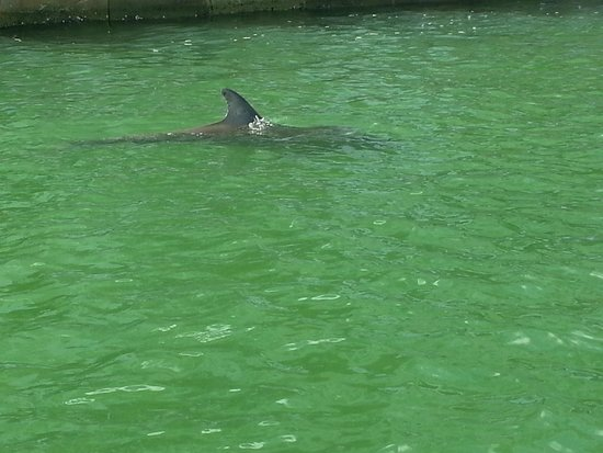 Sea Shell Boat Tours: Saw a lot of dolphins