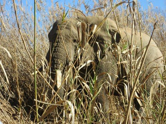 Sanbona Wildlife Reserve - Tilney Manor, Dwyka Tented Lodge, Gondwana Lodge: Awe inspiring