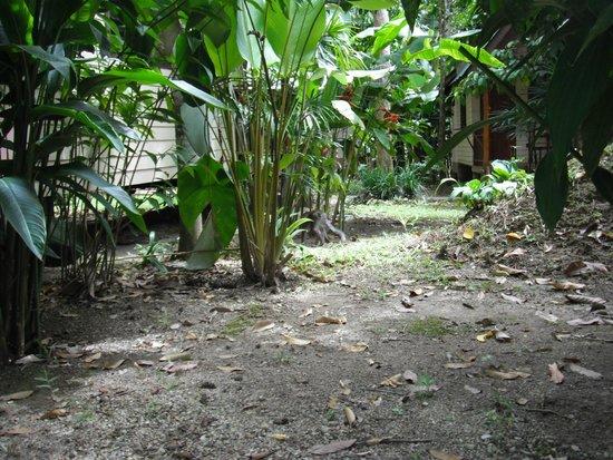 Aonang Cliff View Resort: растения около бунгало