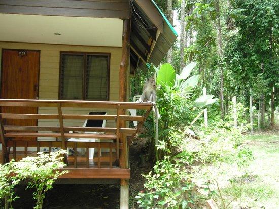 Aonang Cliff View Resort: Меня встретил царь местных обезъян
