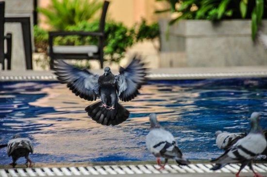 The Metropolitan Hotel & Spa New Delhi: Spakling pool