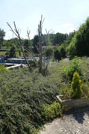The Riverside Inn: Dead tree in neglected garden