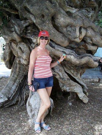 "Globales Santa Lucia: The ""Unique Tree"" in Palma"