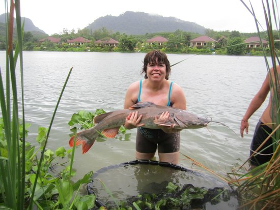 Gillhams Fishing Resorts: A nice Asian cat fish