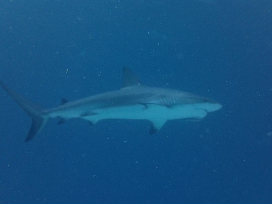 Sandals Royal Bahamian Spa Resort & Offshore Island: Pic from shark dive